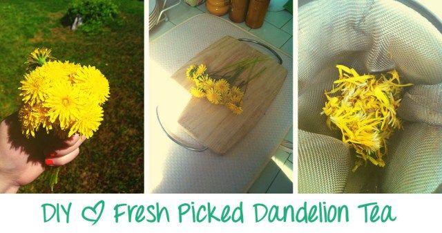 Diy Dandelion Tea Dandelion Tea Dandelion Root Tea Dandelion