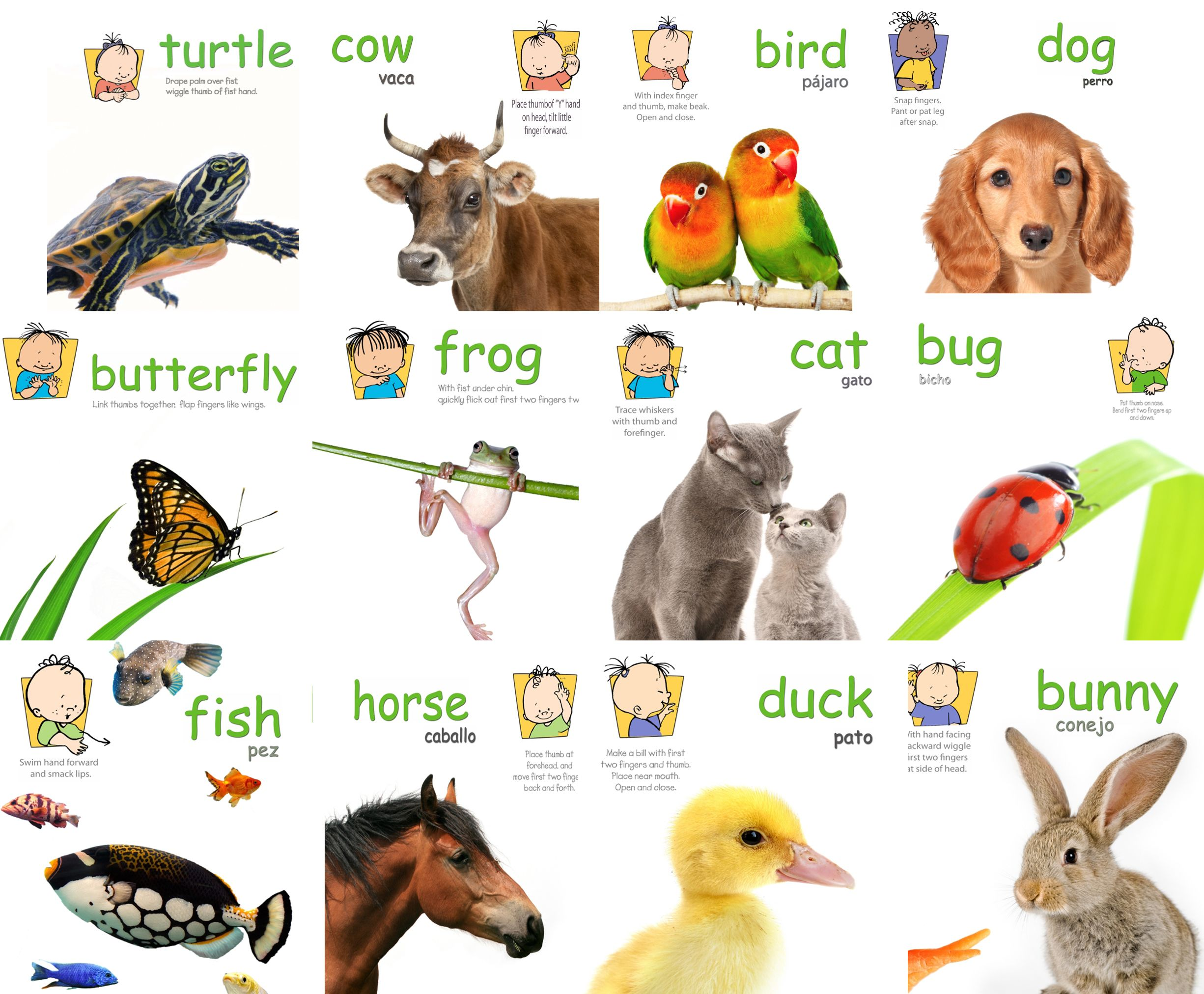 It is a photo of Delicate Asl Animal Signs Printable
