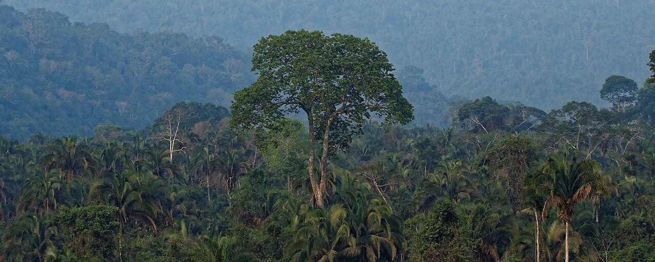Vue Sur La Foret Amazonienne Olivier Jaudoin Heliconia