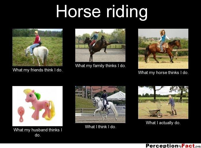 Horse Riding Horse Jokes Funny Horse Memes Funny Horses