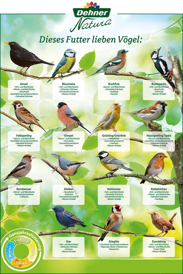 Welches Futter Fur Welchen Vogel Vogel Im Garten Gartengestaltung Ideen Garten