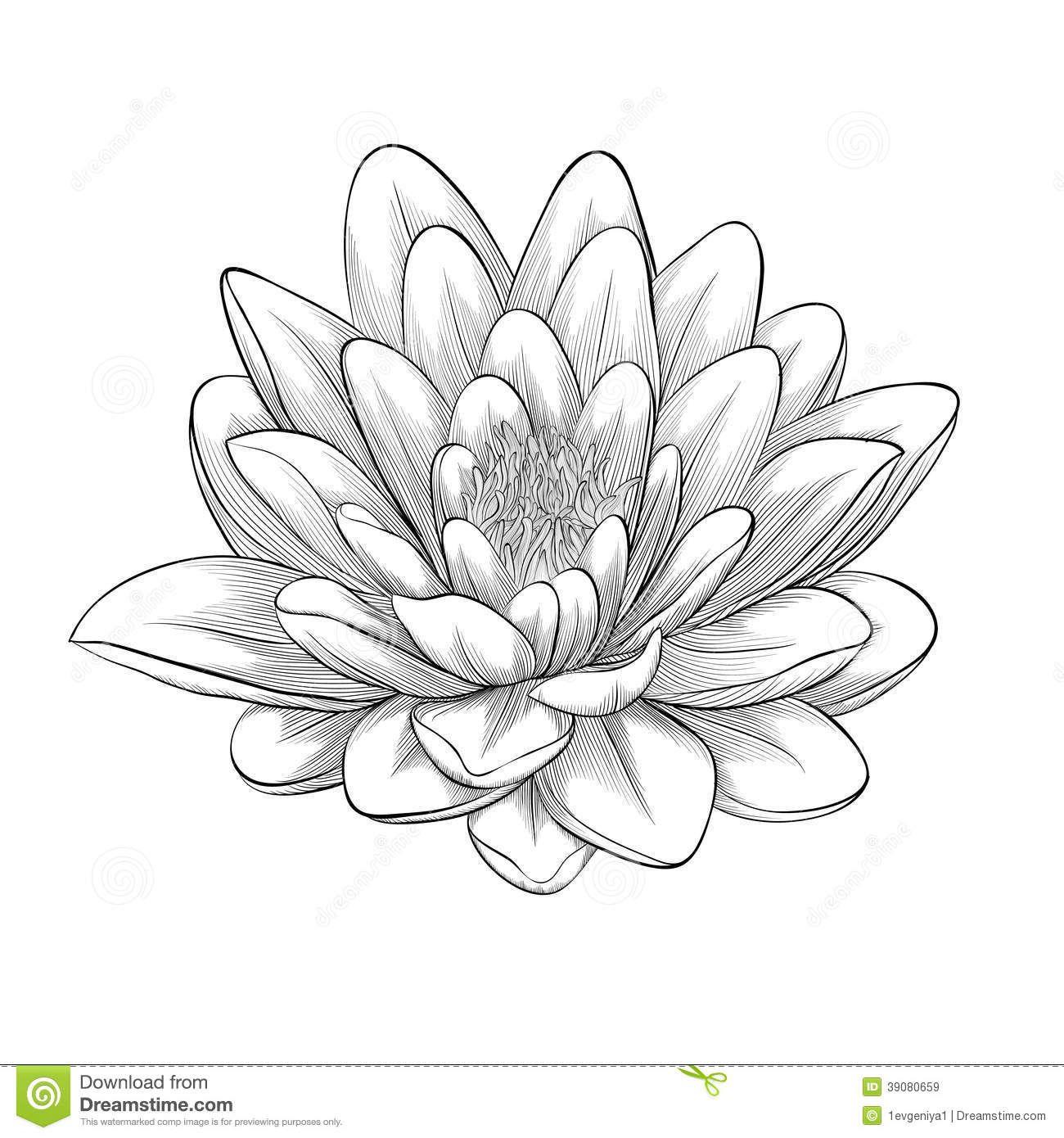 Worksheet. flor de loto dibujo blanco y negro  Buscar con Google  tatto