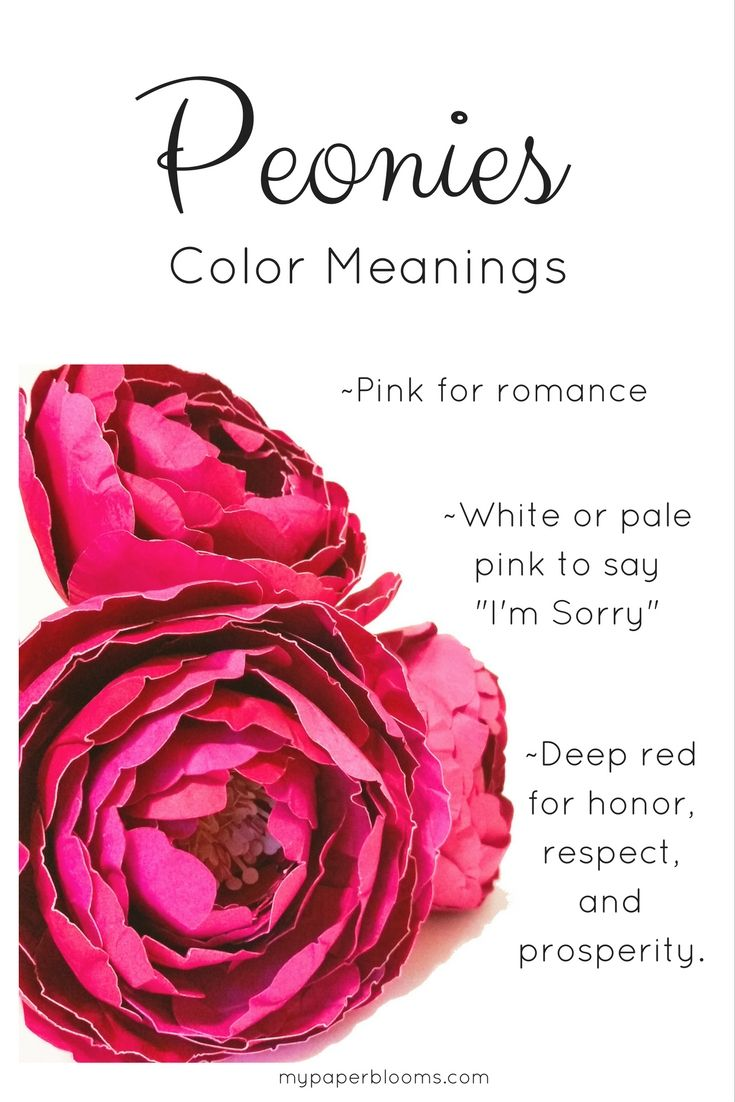 The Color Of Peonies And What They Mean Peonies Pinterest
