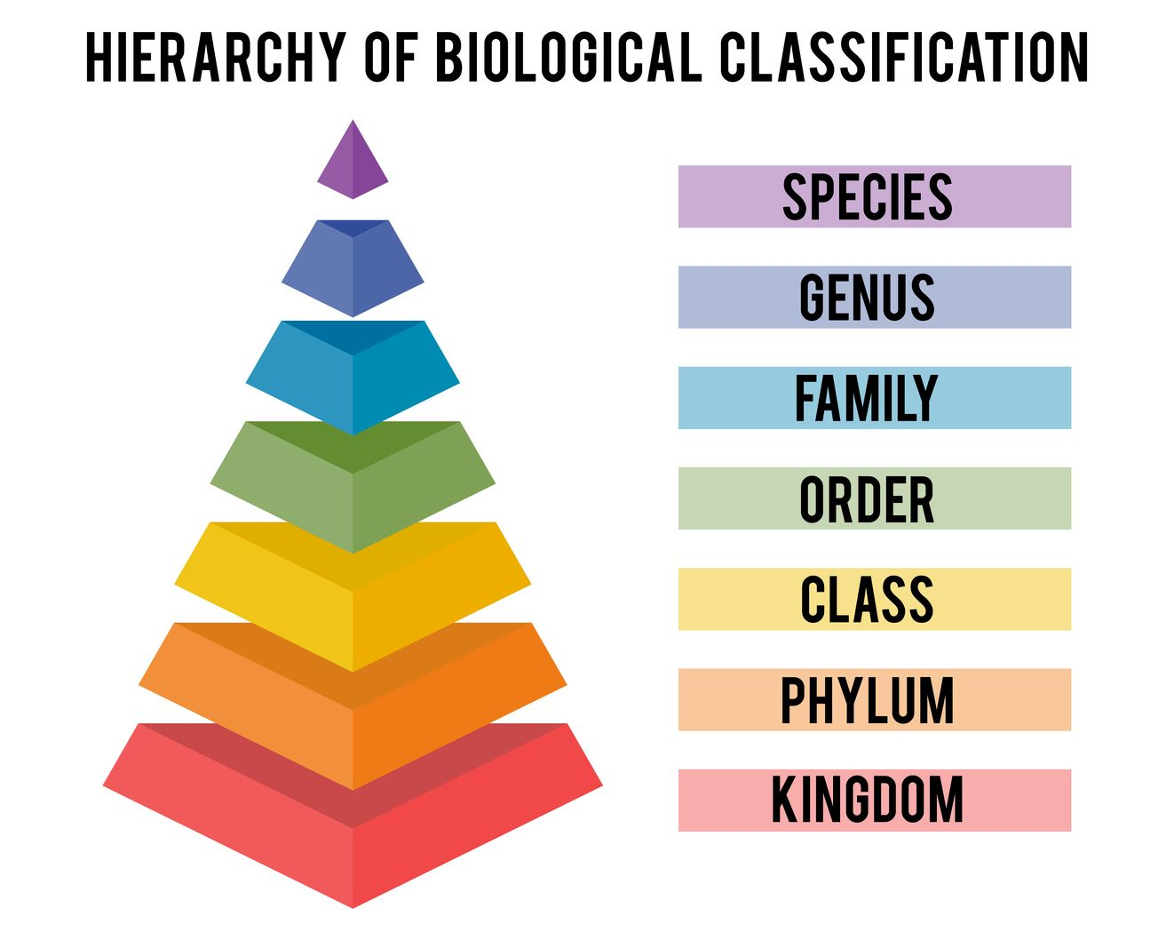 Pin By Mariah Rine On Science In 2020 Taxonomy Taxonomic Classification Homeschool Projects