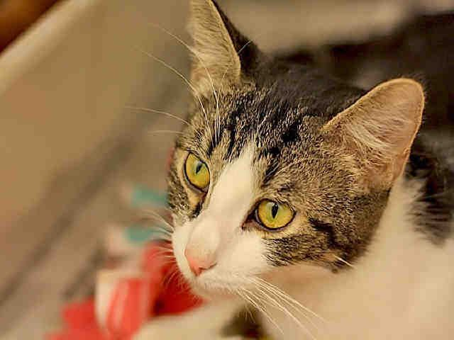 Miss Piggy Is Waiting For You Pittsburgh Pa Petharbor Com Animal Shelter Adopt A Pet Dogs Cats Puppies Kittens Humane S Animals Animal Shelter Pets