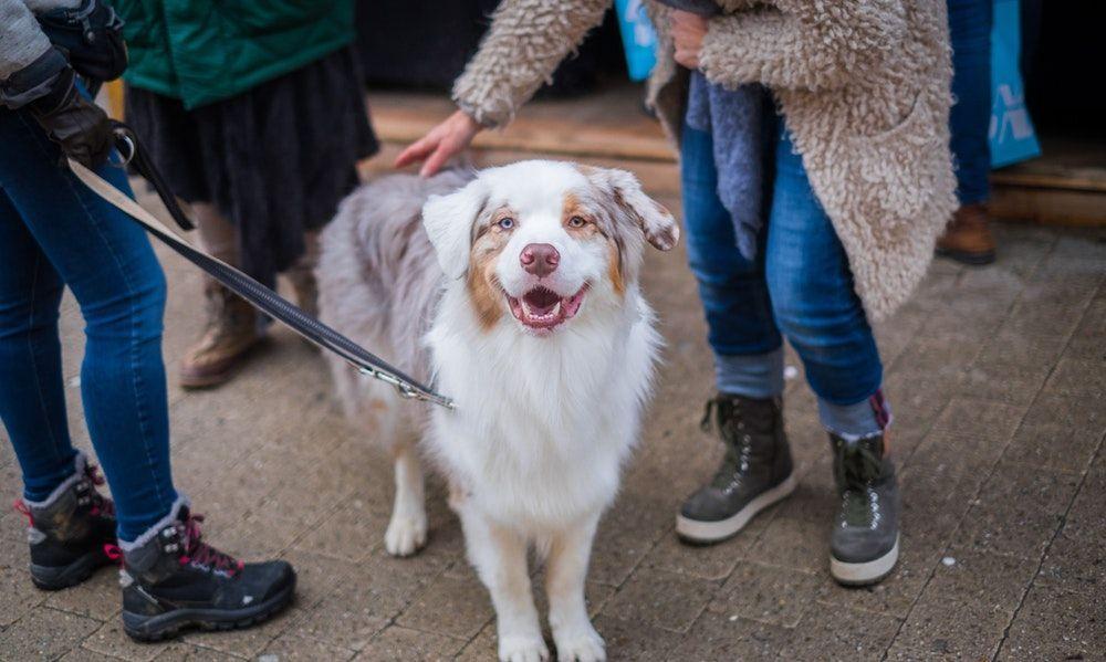 Dog Training Methods Free Dogtraining101 Puppyanddogtrainingtips