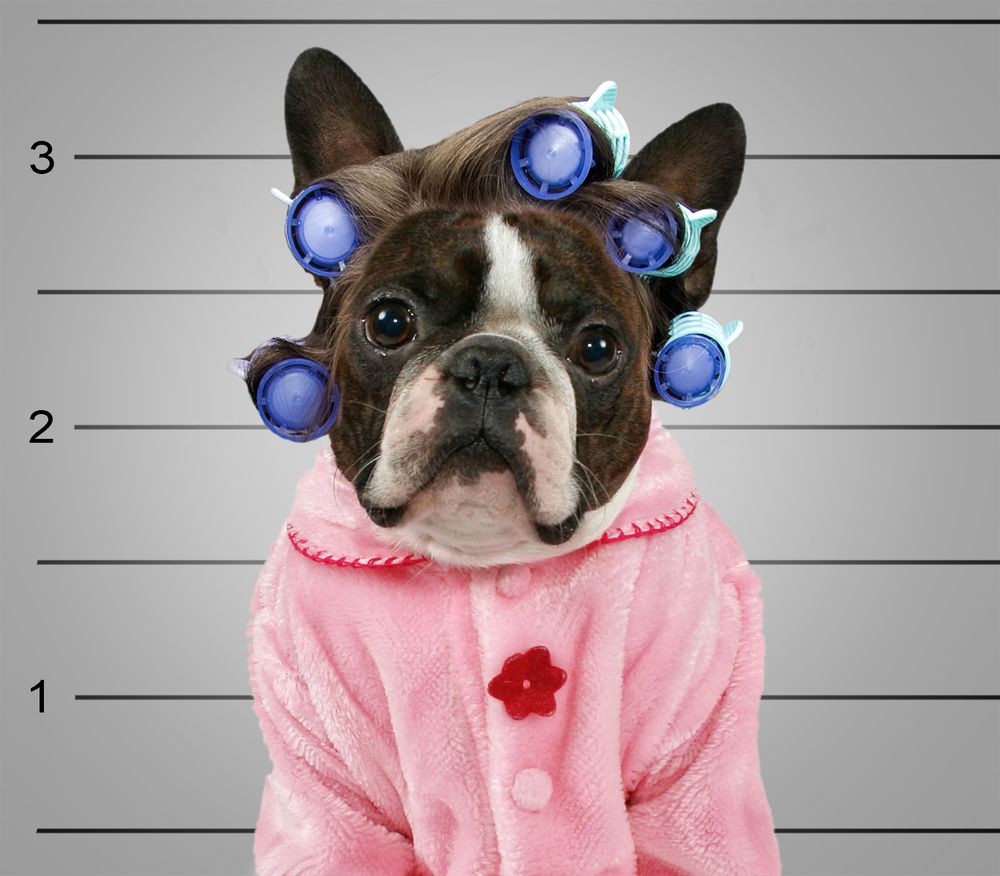 No Need To Spend A Fortune On These: Quick, Cheap, And Totally Easy Pet Costumes