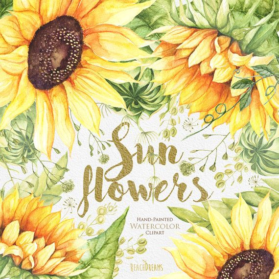 sunflower watercolor flower clipart