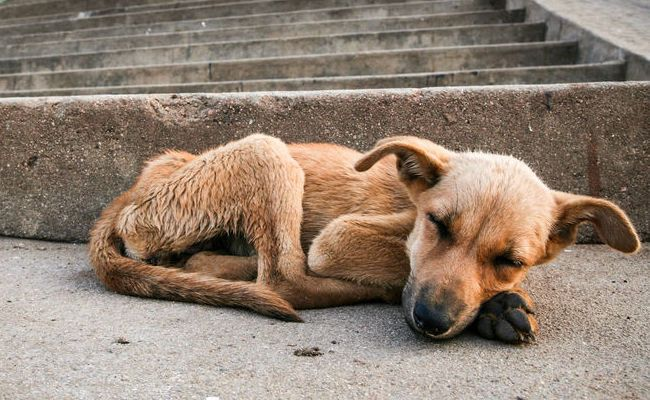 How To Help Stray Animals Survive The Winter | Care2 Causes