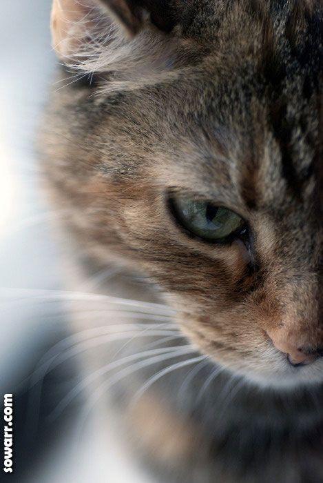 صور قطط جميله Sowarr Com موقع صور أنت في صورة Gatos Bonitos Gatos Gatos Cats