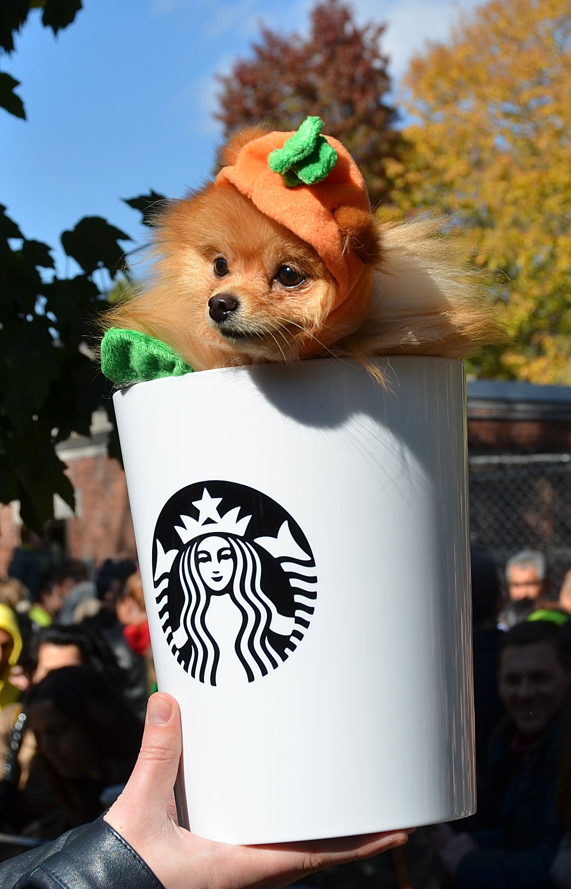 Pumpkin Spice Latte pomeranian Cute Pet Costumes Pet