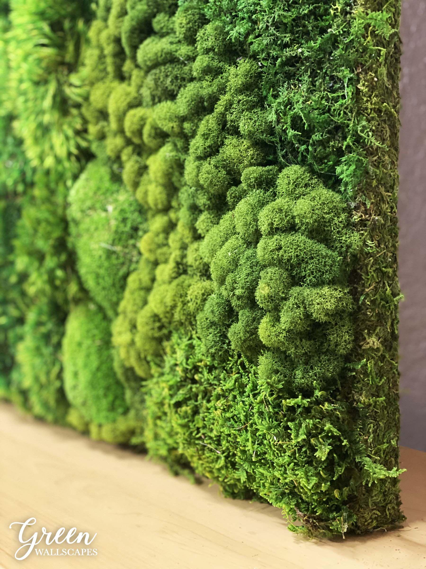 Pin on Moss Walls