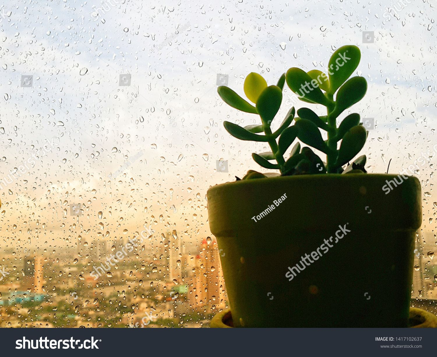 The view from window at indoor plant after the rain. #Sponsored , #spon, #window#view#indoor#rain