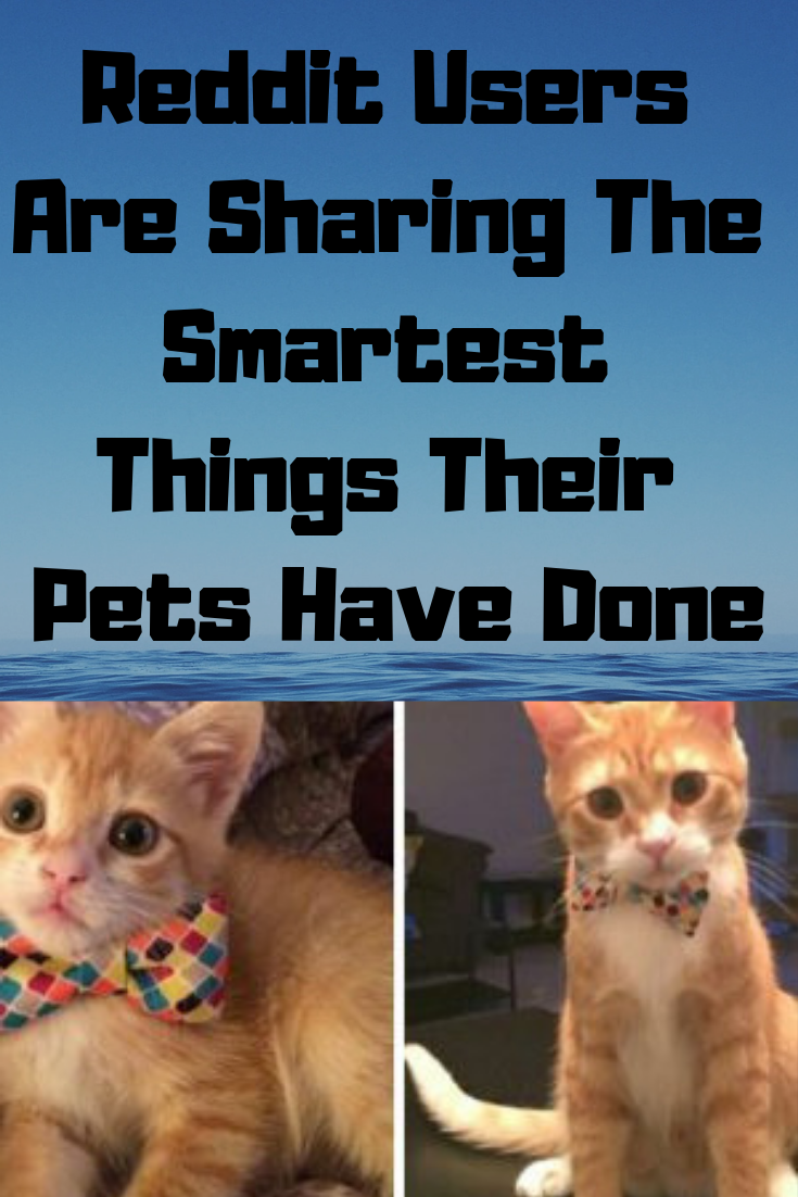 Reddit Users Are Sharing The Smartest Things Their Pets Have
