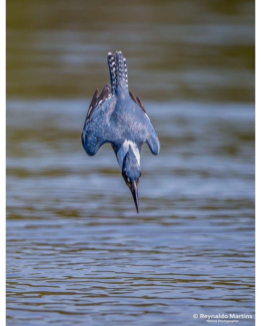 45 km h pantanal transpantaneira kingfisher birding