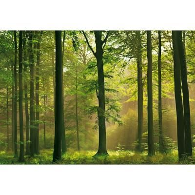 100 in. x 144 in. Autumn Forest Wall Mural, Multicolor | Autumn ...