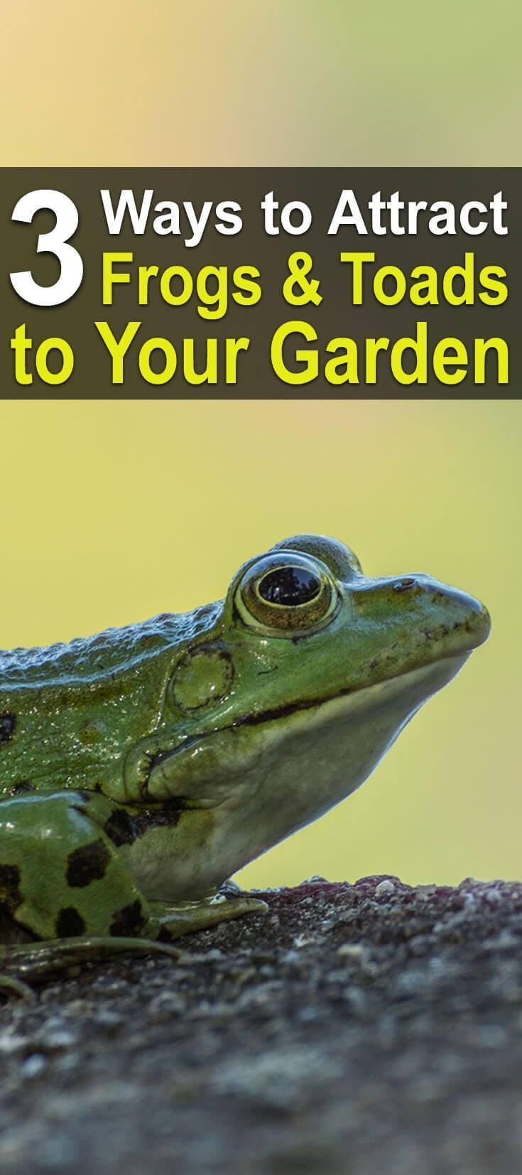 how to keep frogs away from garden