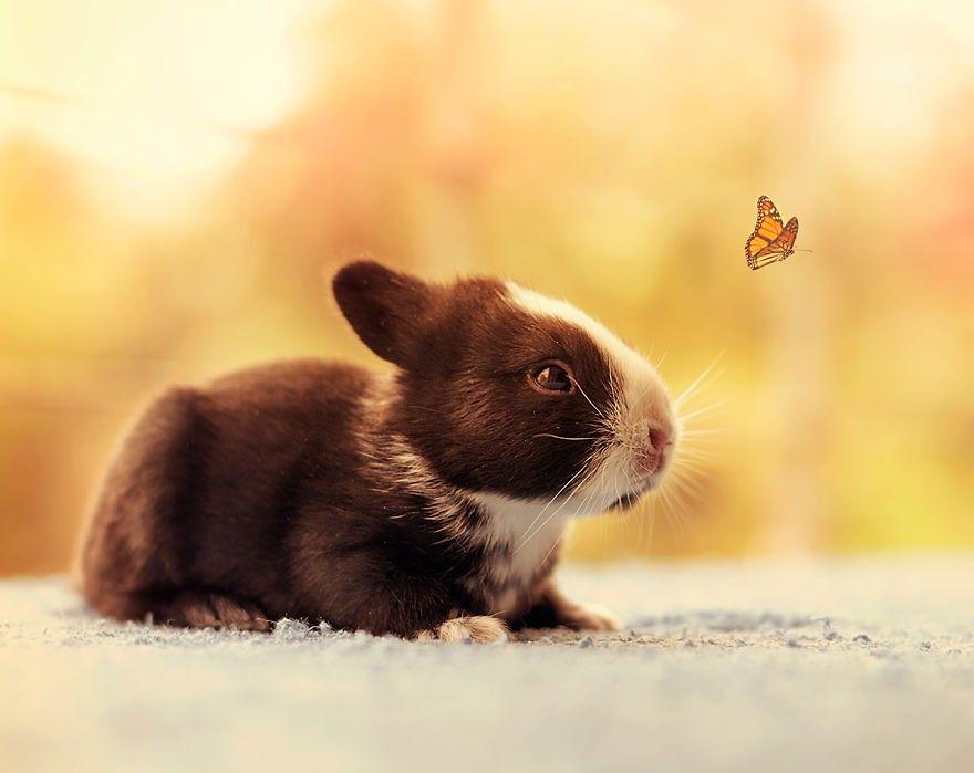 Os primeiros 30 dias de um coelhinho