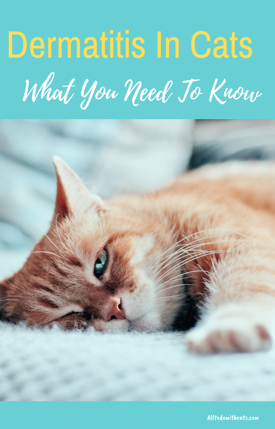 How To Treat Dermatitis In Cats What You Need To Know Cat Allergies Cat Diseases Cat Skin