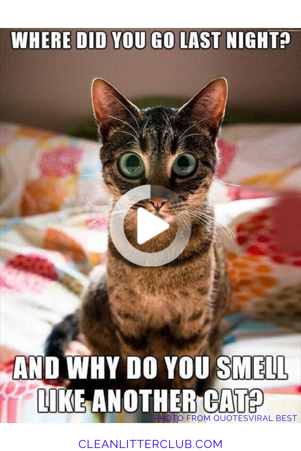 The Top Ten Funny Cat Memes Of The Past Decade Cat Memes Cats Funny Cat Memes