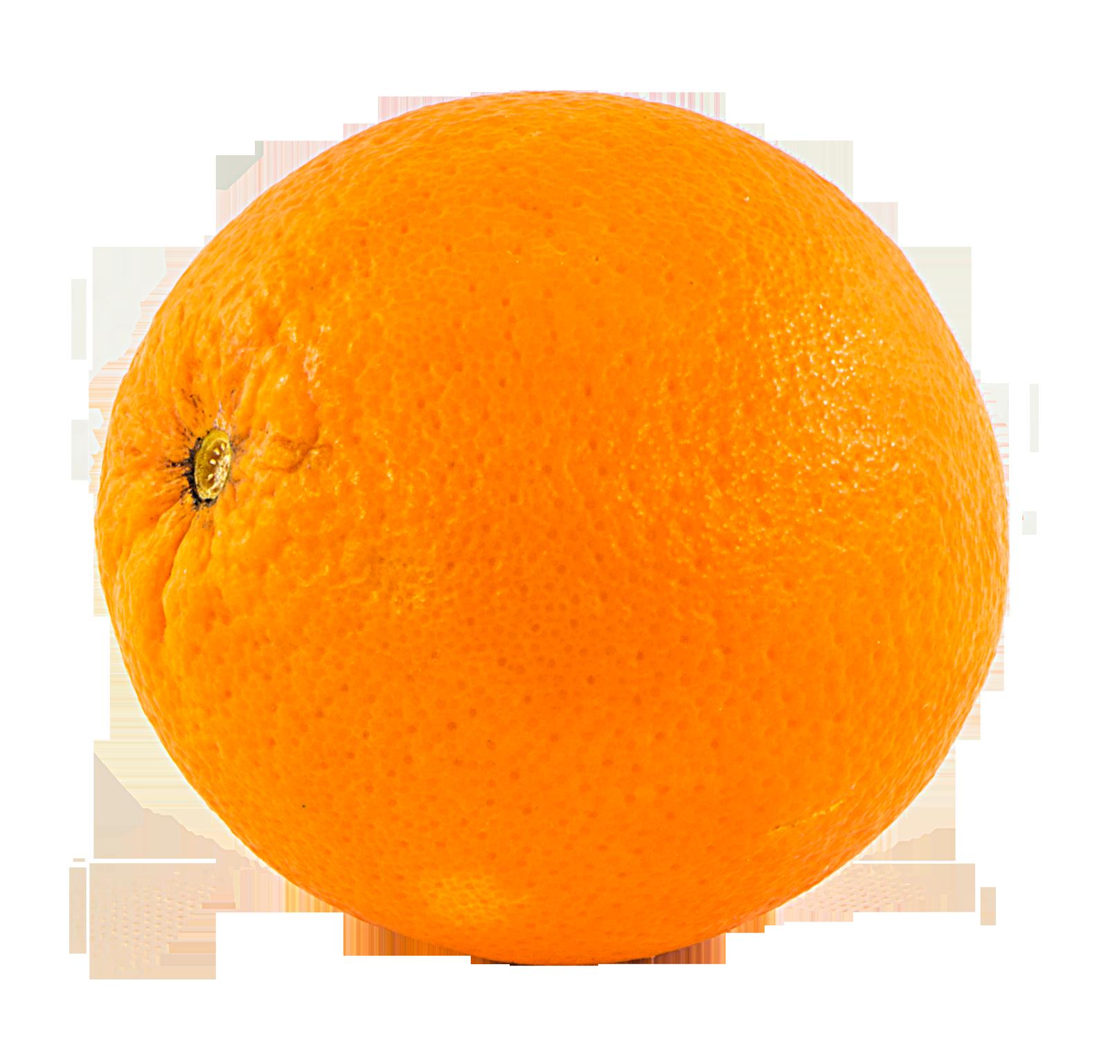 Orange Png Image Orange Free Png Free Png Downloads