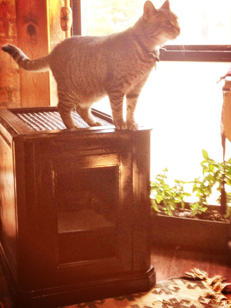 12 diy kitty litter hideouts from steamer trunks to ikea