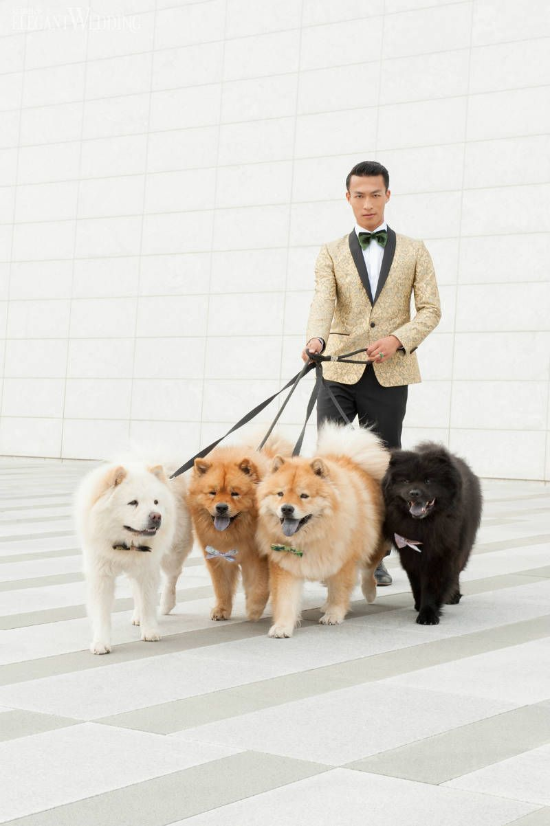 Chow Chows Fluffy Chow Chows Chow Chows On A Leash Year Of The