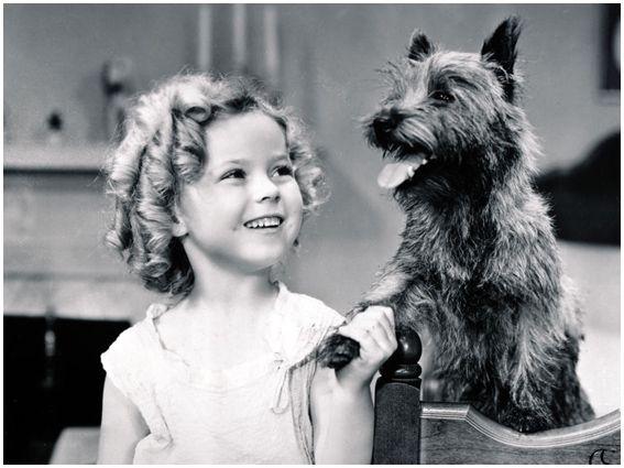 Resultado de imagem para Shirley Temple em Bright Eyes, de 1934, como o cão Rags