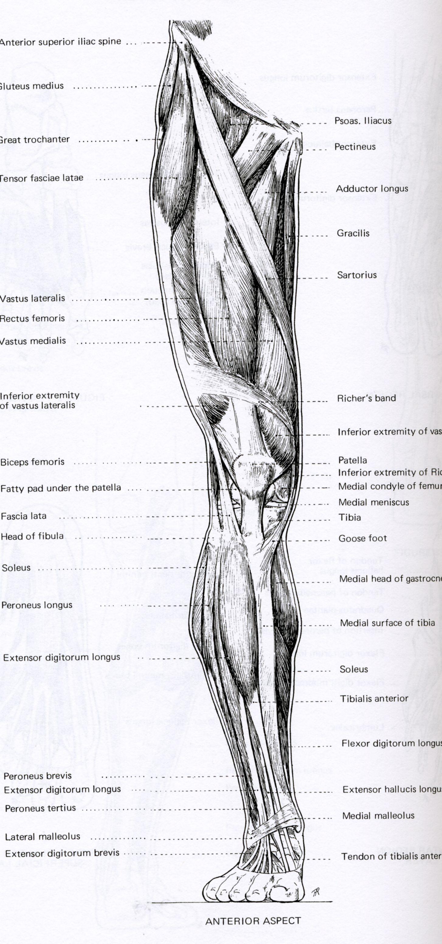 Back Anatomy Reference images | Anatomy | Pinterest | Anatomie ...