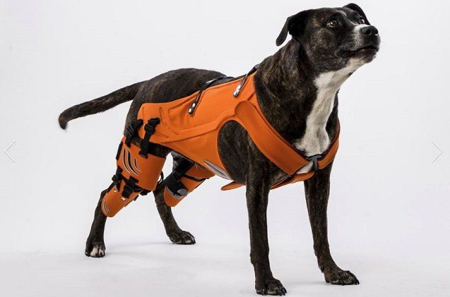 The Hipster Harness Is Here To Help Heal Your Dog S Hip Dysplasia