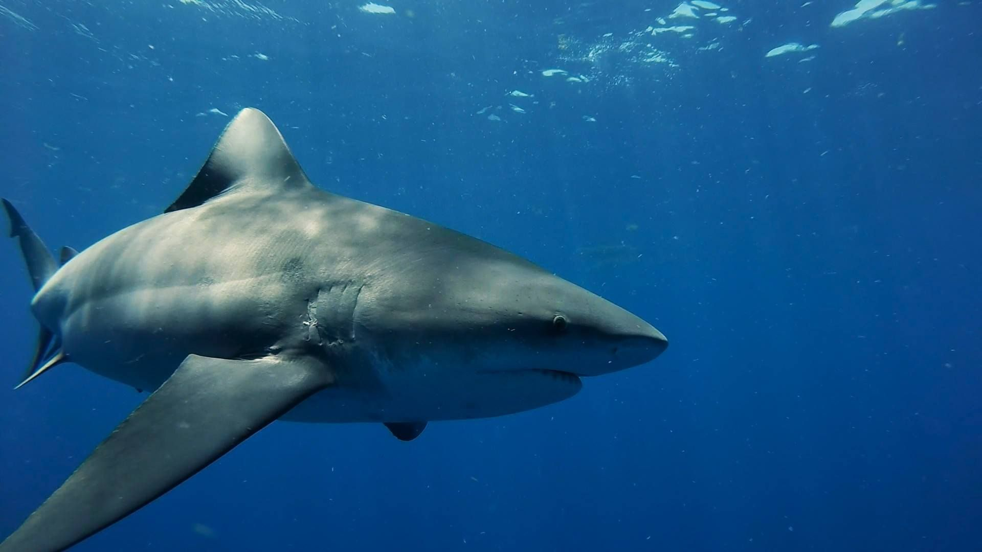 Want To Go Shark Diving In Florida Hit The Keys Or Head To Jupiter Or Palm Beach In The Miami Area Expect To Pay 95 To Shark Diving Shark Shark Cage Diving