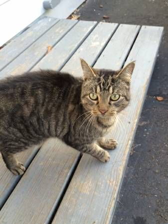 Found Male Brown Multi Colored Cat East Hartford We Found A