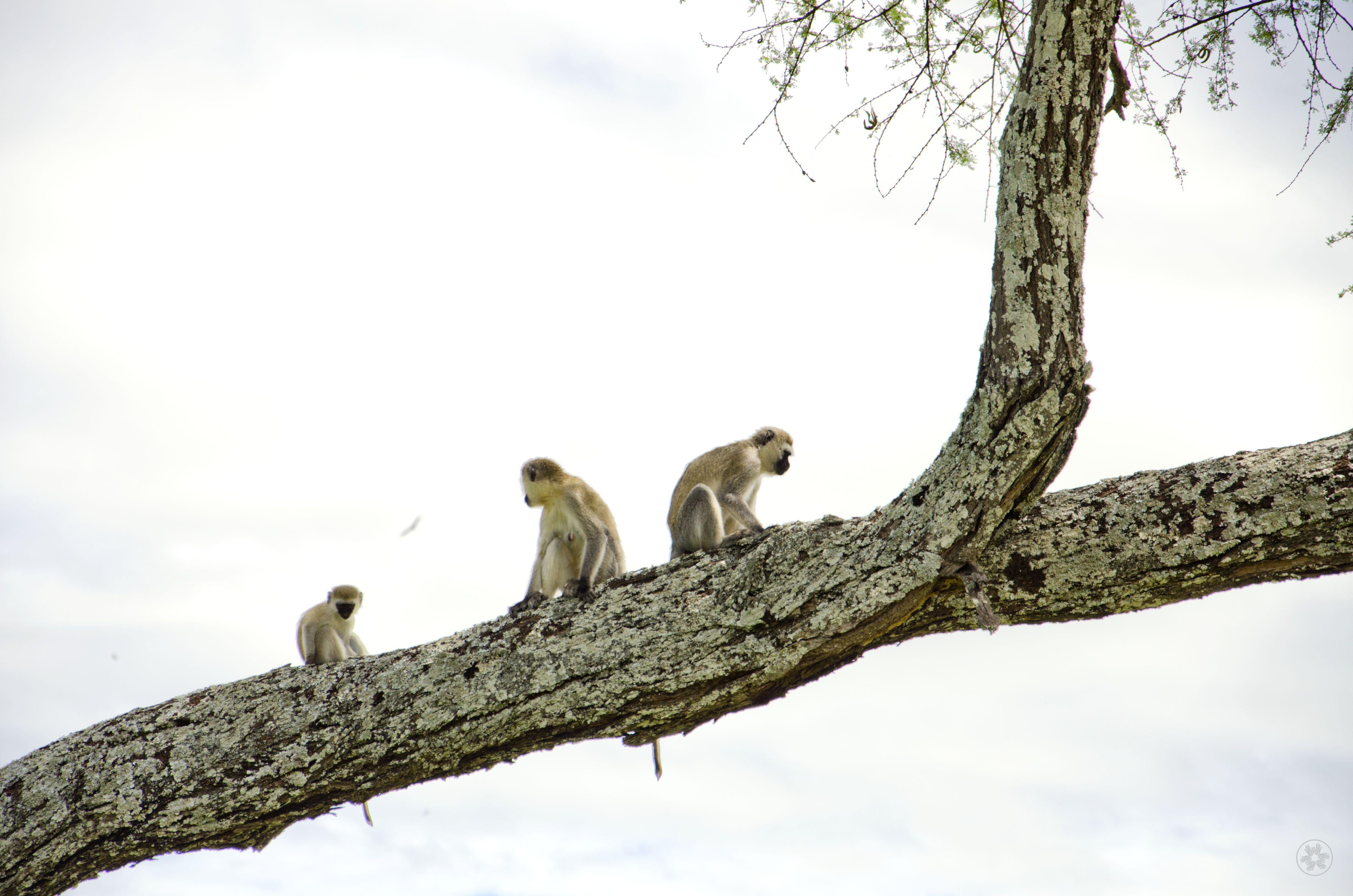 Tarangire National Park Tanzania Tanzania, National