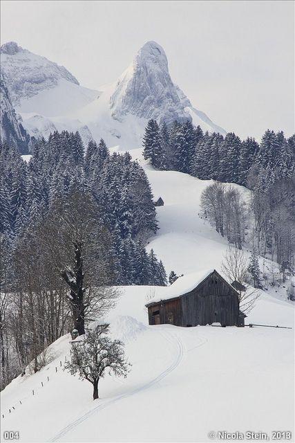 Winter Snow Appenzell Switzerland Winter Scenery