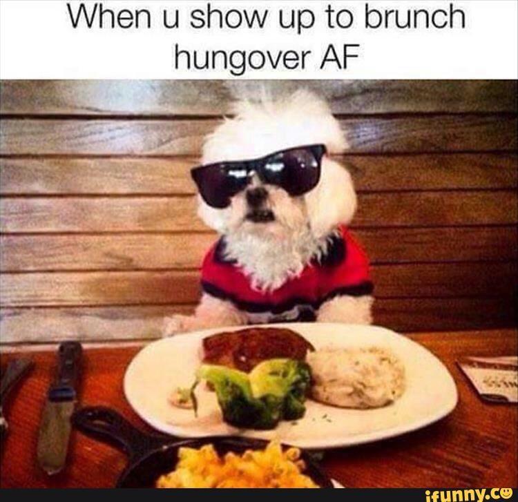 lol, meme, true, breakfast, hungover | True | Dogs, Funny ...