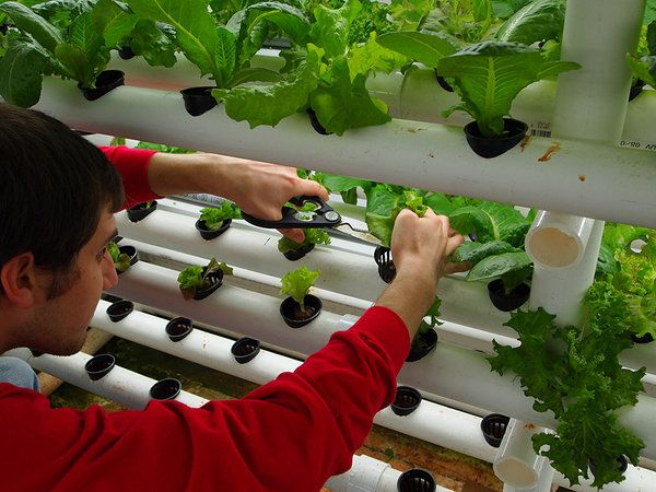 17 Best images about Hydroponic Gardening on Pinterest Gardens