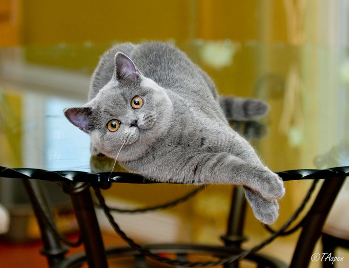 Gallery Sirs Dames Cat Lovers Cute Cats Beautiful Cats
