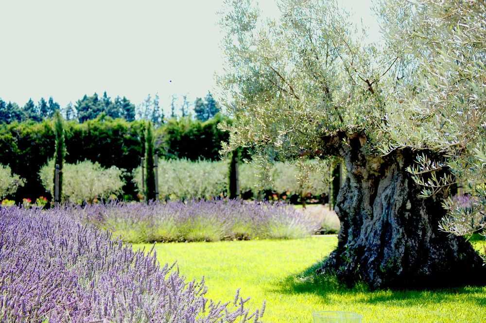 Photo of Domaine Mondesir, Maison de charme en Provence