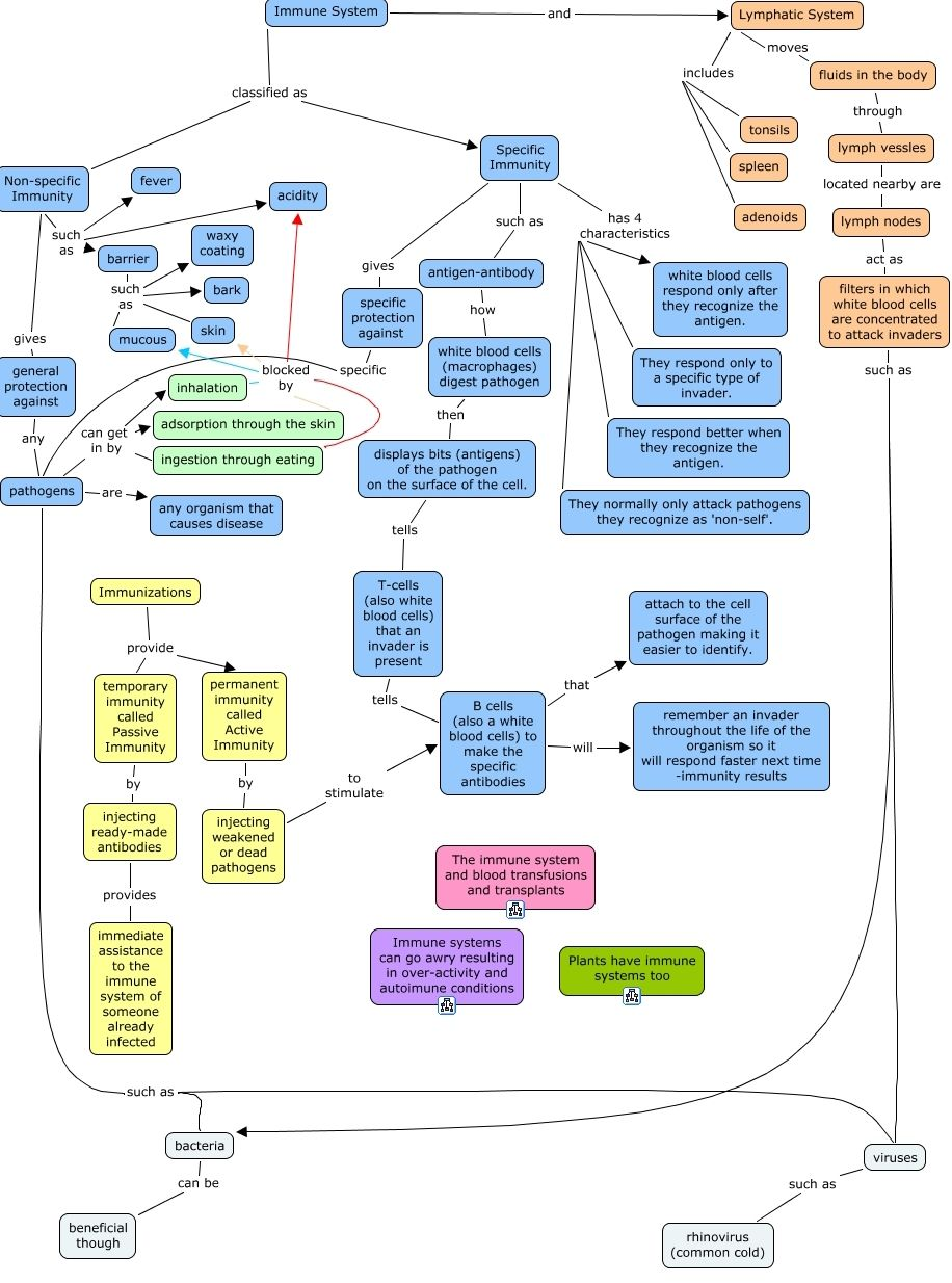 Lymphatic and immune system map also click here to see  flowchart of the immunity rh pinterest