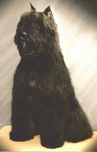 Best Dogs EVER !!   Bouvier de Flandres - had a Bouvier when I was a kid. He was such a good dog!. (woody)  I'd get another in a hearbeat. - D.S.