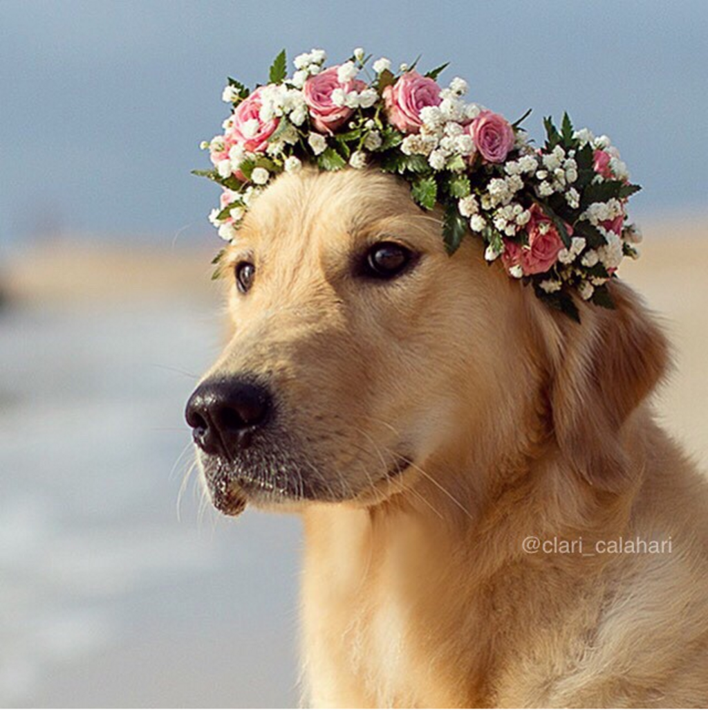 We humans can only hope our beach photos could look this