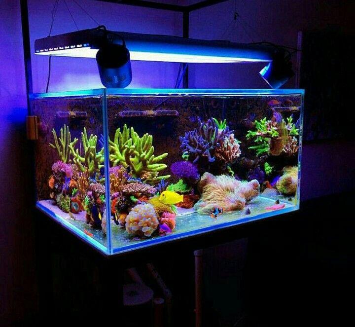 Pin von ph cunha auf marine tank pinterest aquarium for Salzwasser aquarium fische