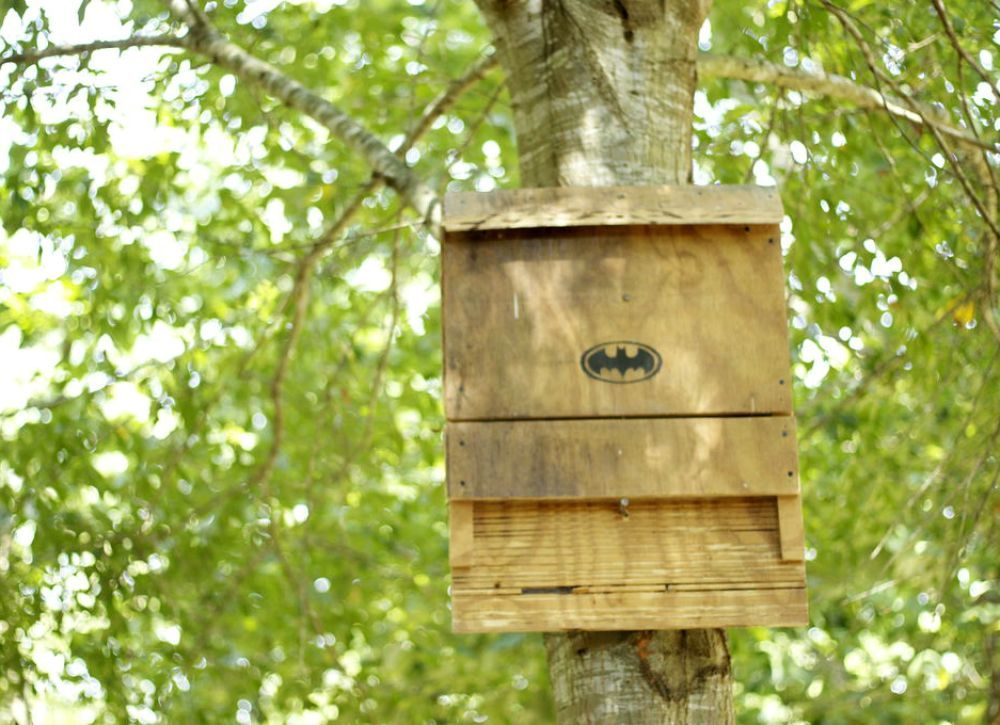 how to encourage bats to a bat house