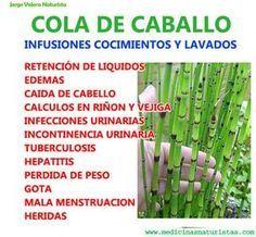 Beneficios De Cola De Caballo Hierbas Curativas Plantas Medicinales Remedios Para La Salud