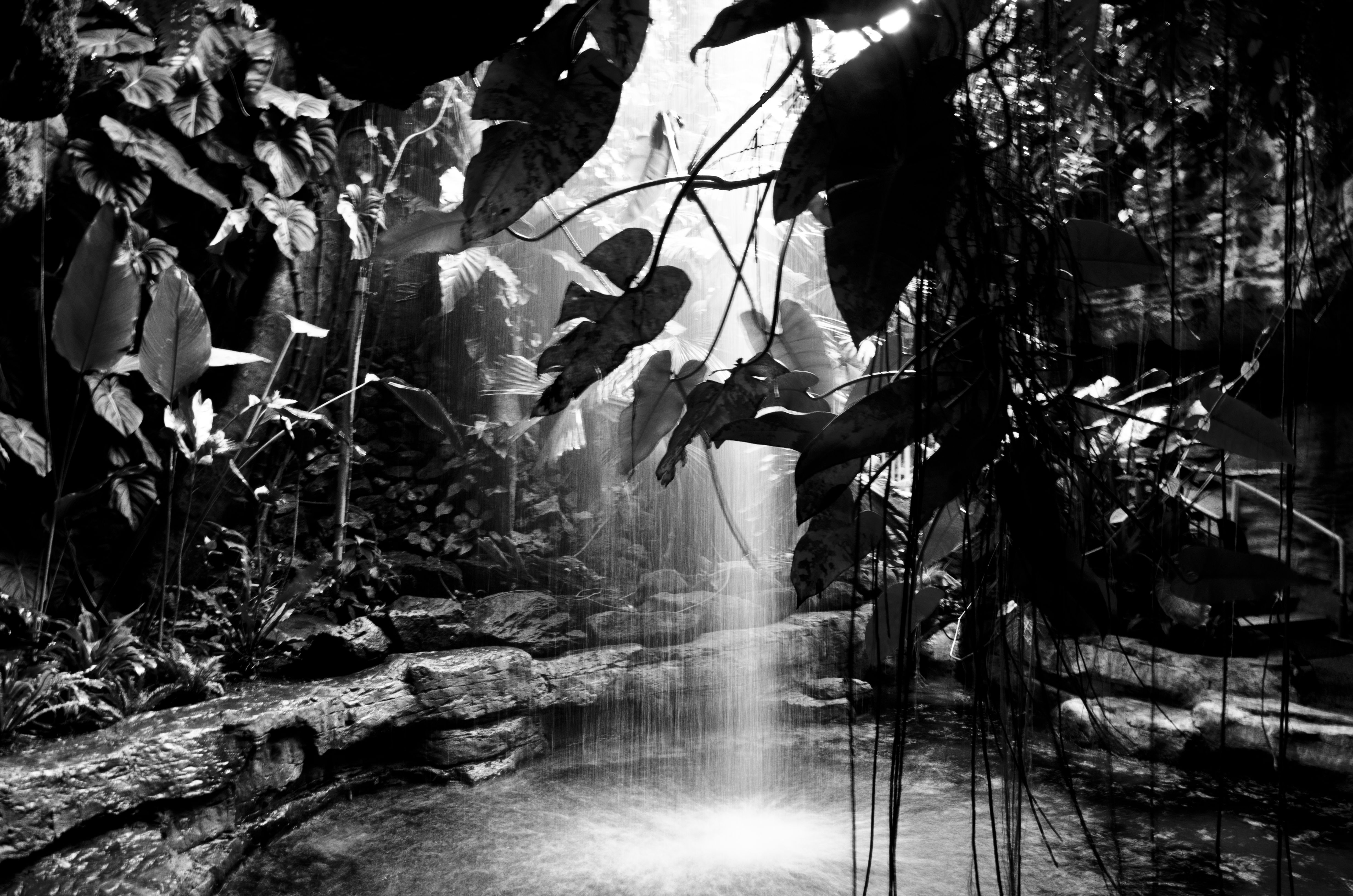 Nature Photography Black And White Visual Artist Rob Oakley Wallpaper