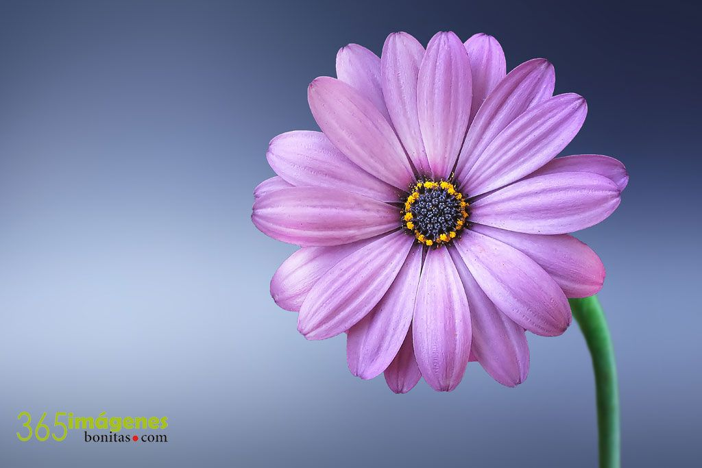 Descargar Fondos De Pantalla Para Pc Flores: FONDOS DE PANTALLA Con Imágenes Bonitas【mayo