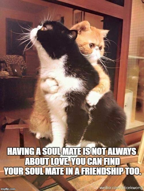Cats Hugging Meme Generator Imgflip With Images Cats Cute