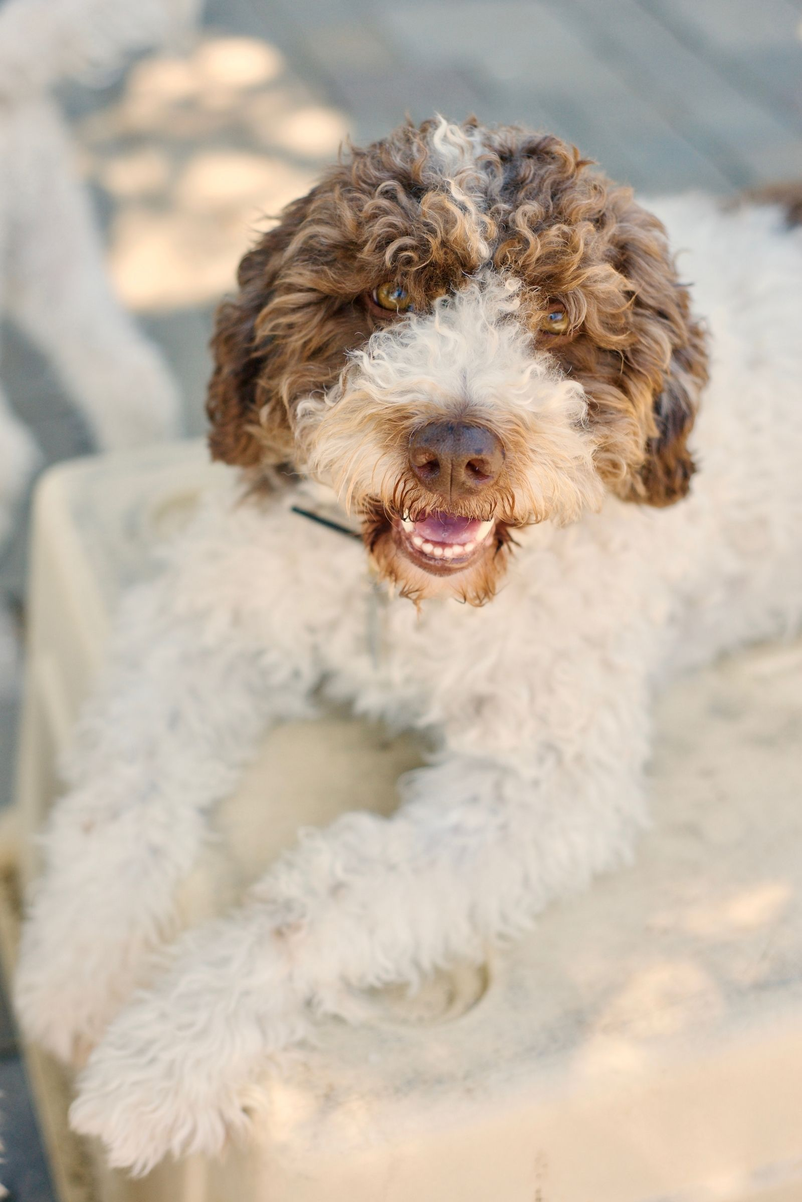 The 20 Cutest Dog Breeds That Don't Shed Dog breeds that