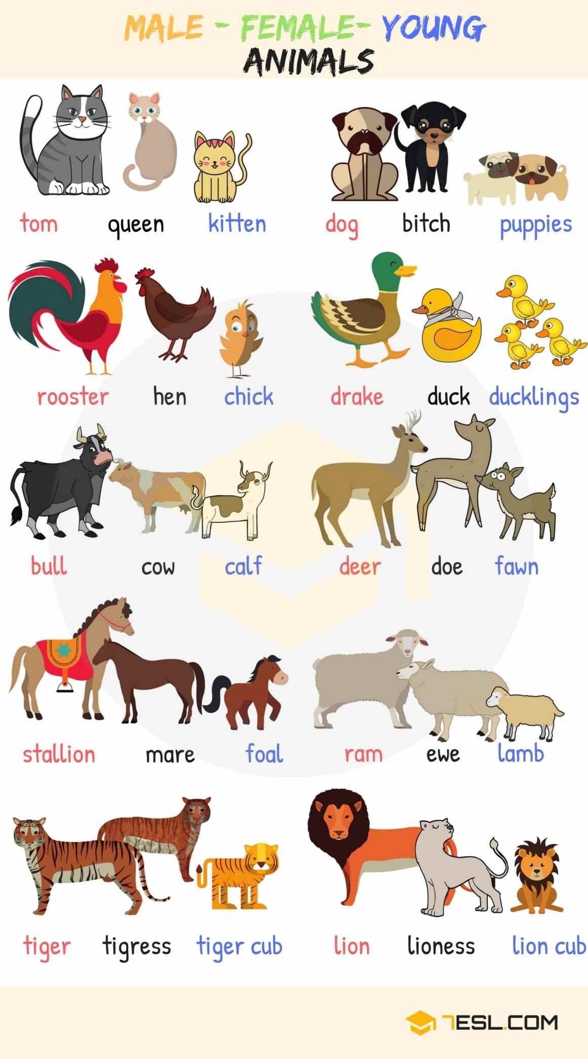 English Vocabulary Learn Animal Names