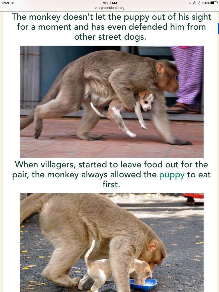 wow number Animal intelligence, Street dogs, Rare albino